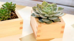 video: diy sake box succulents