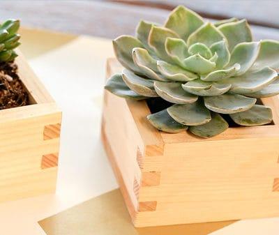video: diy sake box succulents