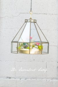 The Hanging Succulent Lamp