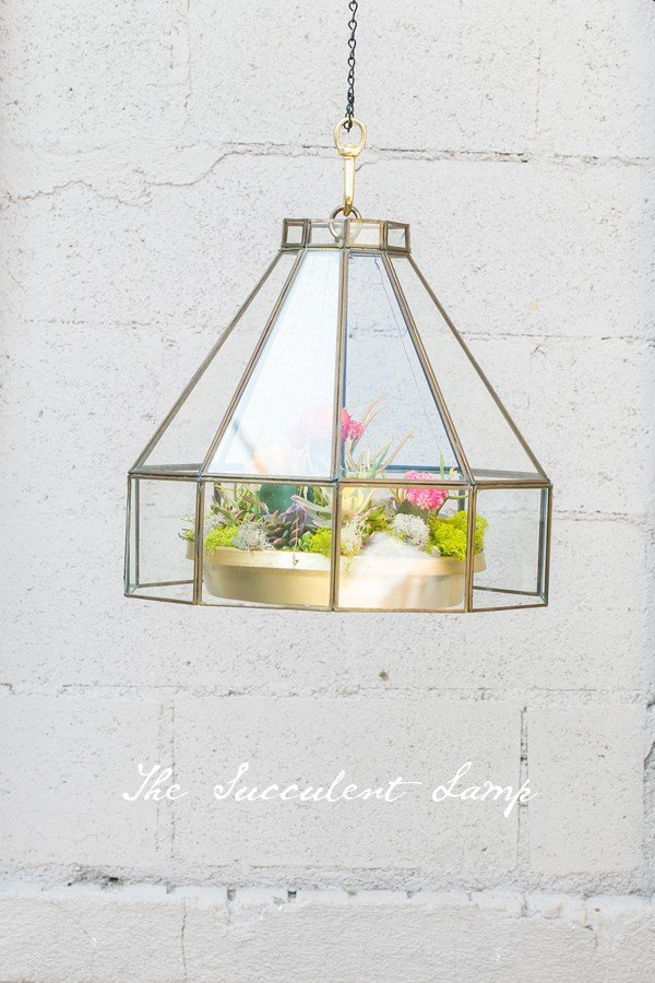 The Hanging Succulent Lamp Sugar And Charm Sweet