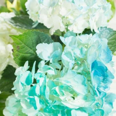 Video: Spray Painting Flowers