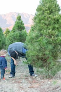 8 Reasons Why I Won't Cut Down a Christmas Tree Ever Again…