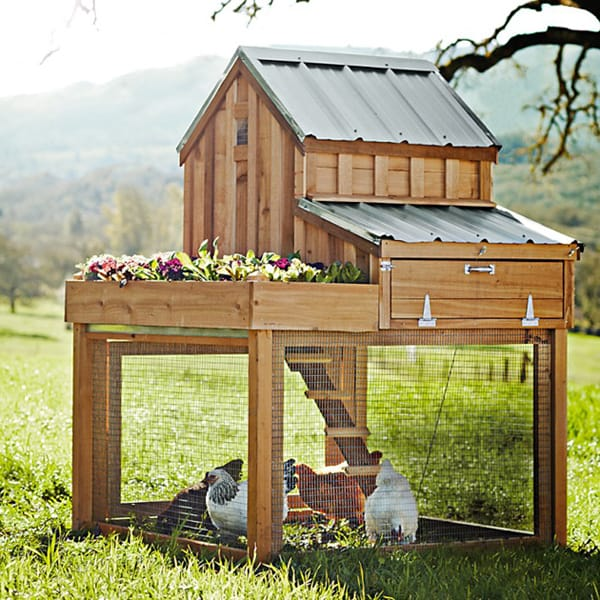 small wooden coop with a chic tin roof