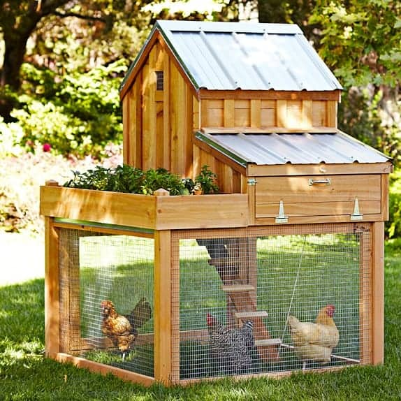 The most charming chicken coop with a tin roof, flowers and hens before.