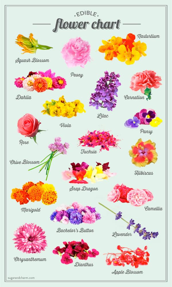 A graphic chart with edible flowers