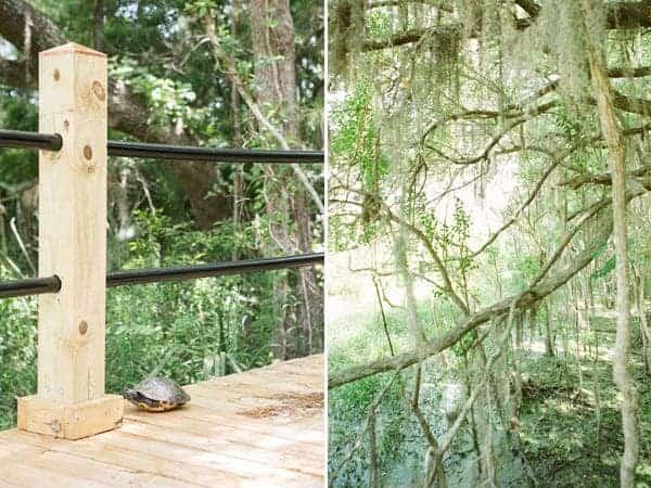 charleston swamp