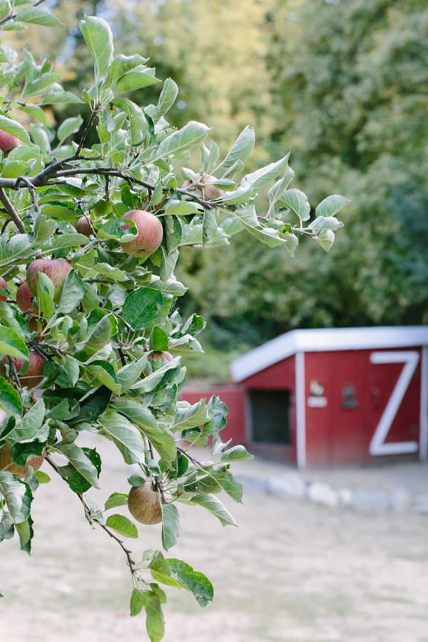 ApplePicking_4