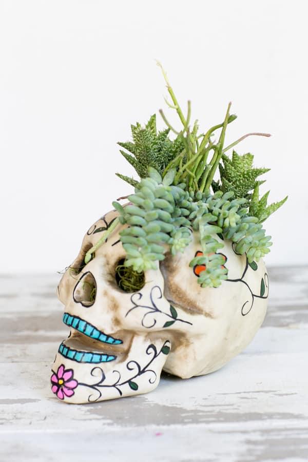 side shot of skull planter