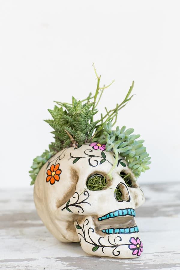 shot of skull planter