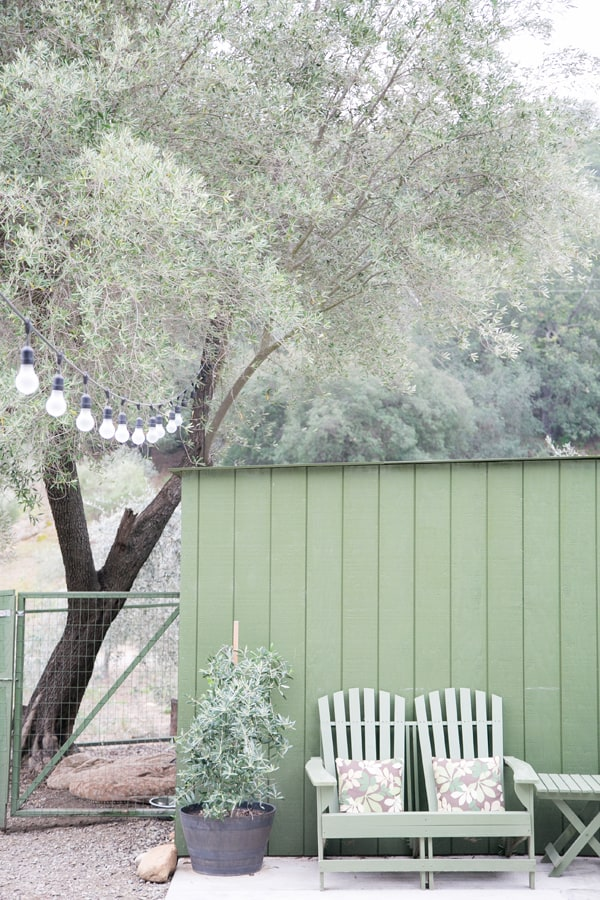 Twi green chairs next to a green wall with olive trees.