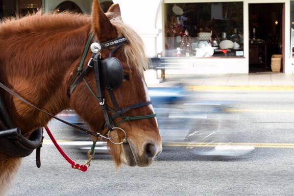 Horse in Ojai