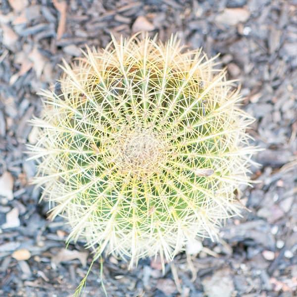 pretty plant in Ojai