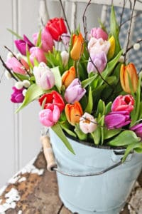 How to Care for Cut Tulips