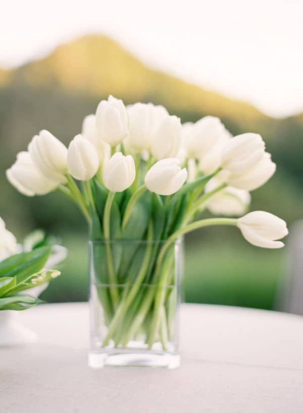How To Care For Cut Tulips Sugar And Charm Sugar And Charm