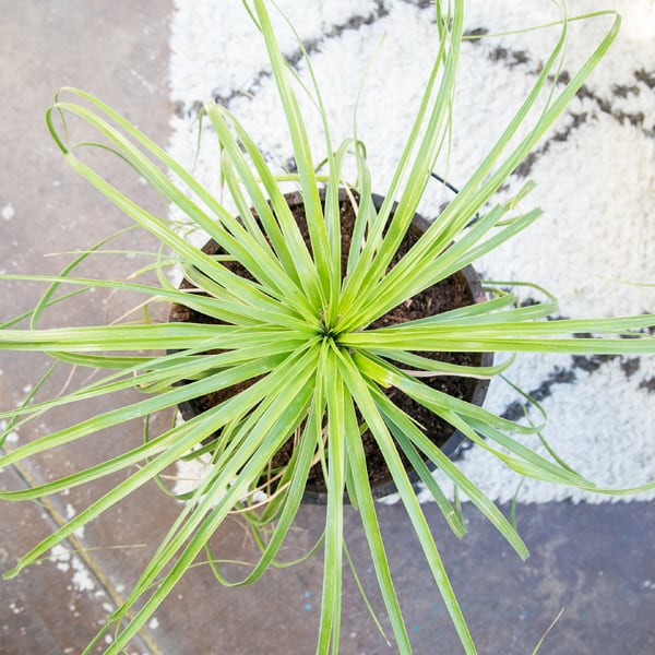 patio-decor-3