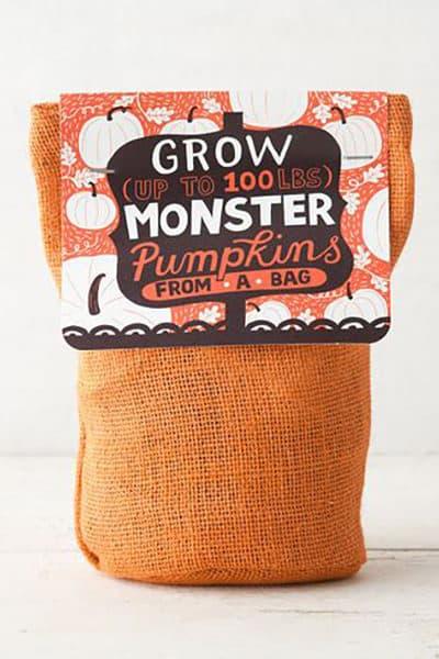 growapumpkin_dailycharm