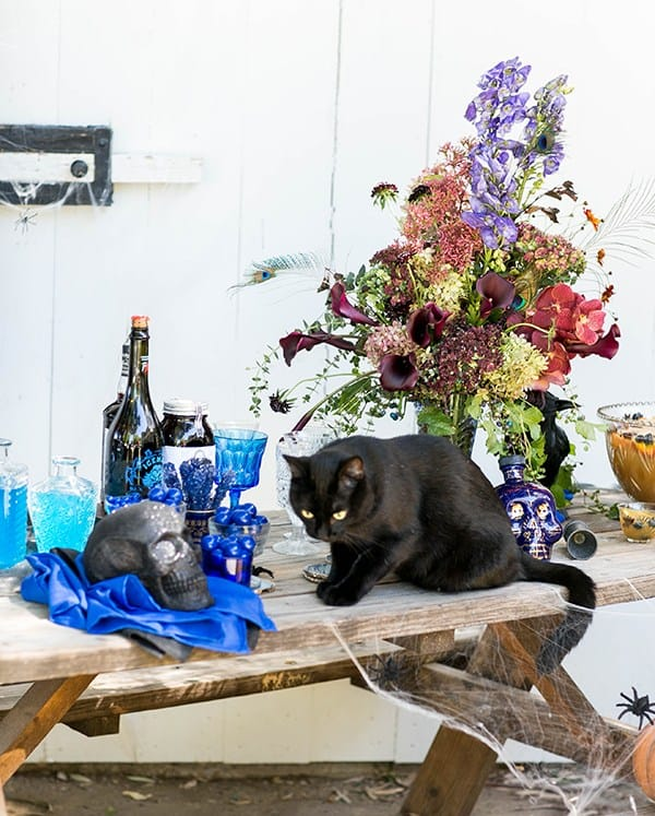 Black cat on bar with flowers and skeleton.