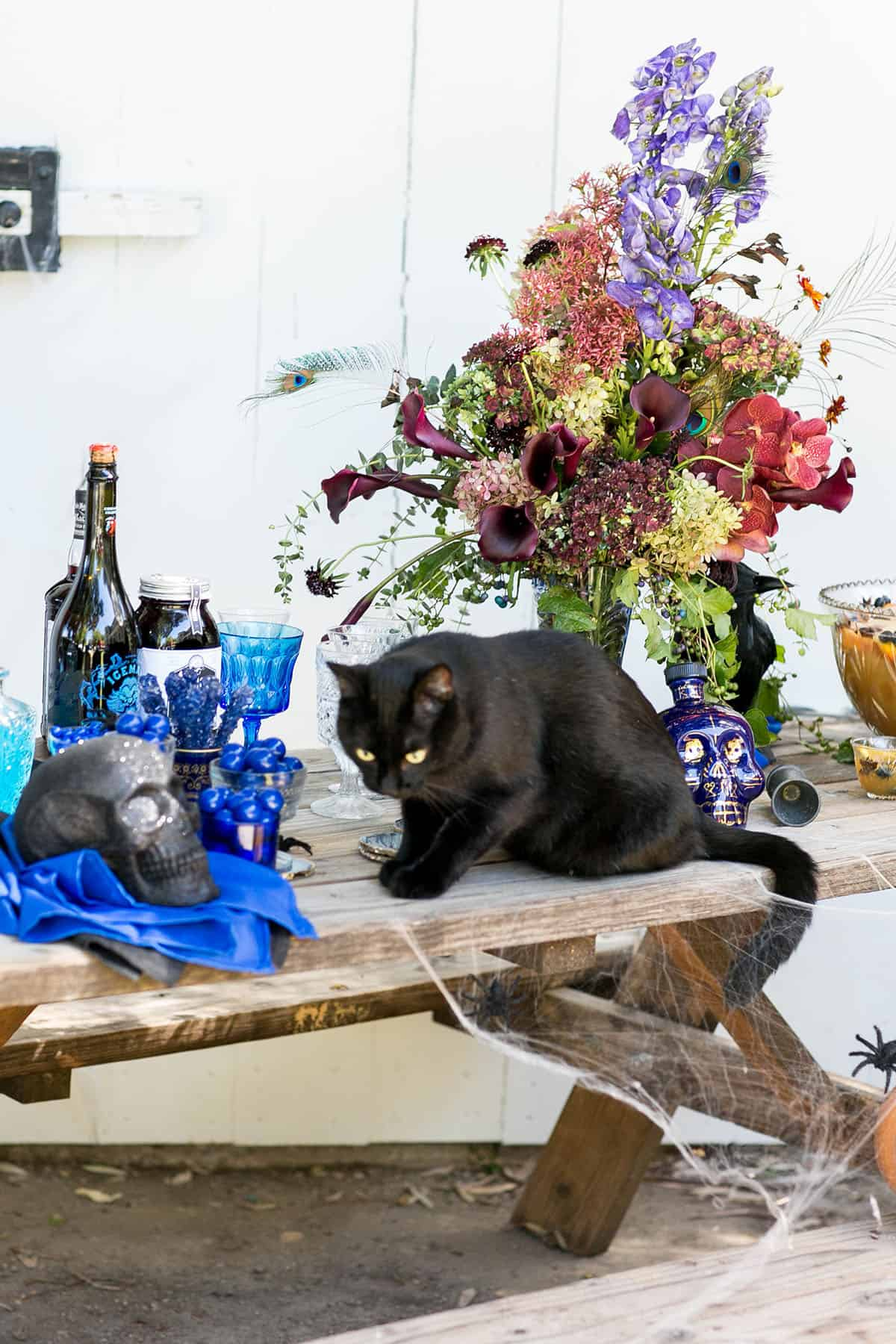 black cat on a Halloween table