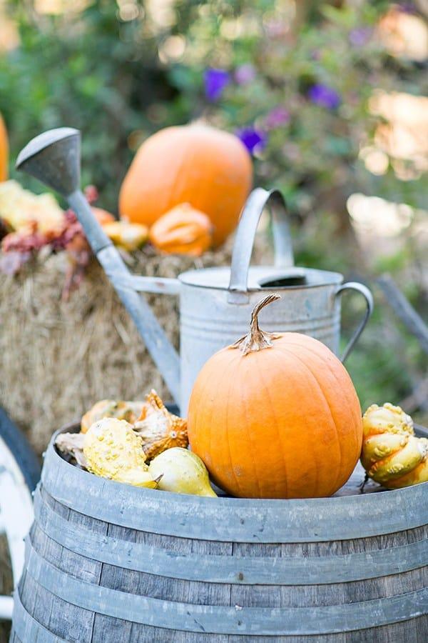 shot of pumpkins on a barrel