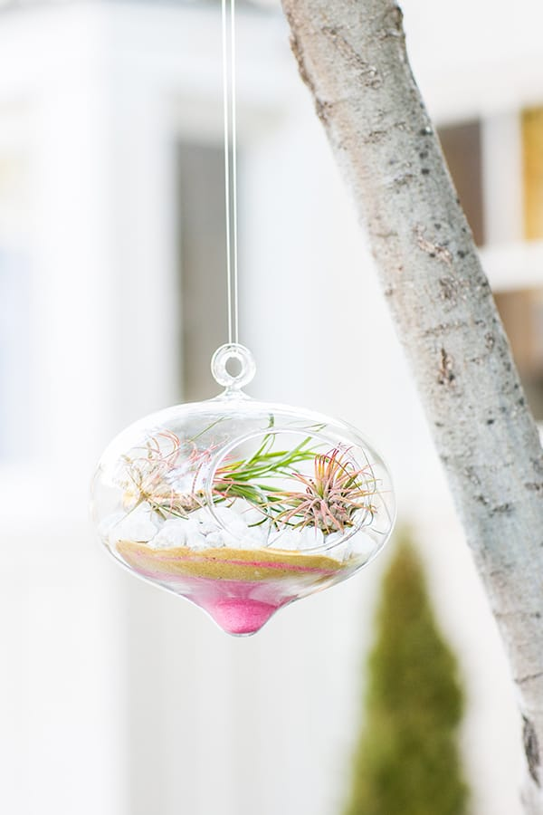 Valentine's Day Terrarium hanging from a tree.