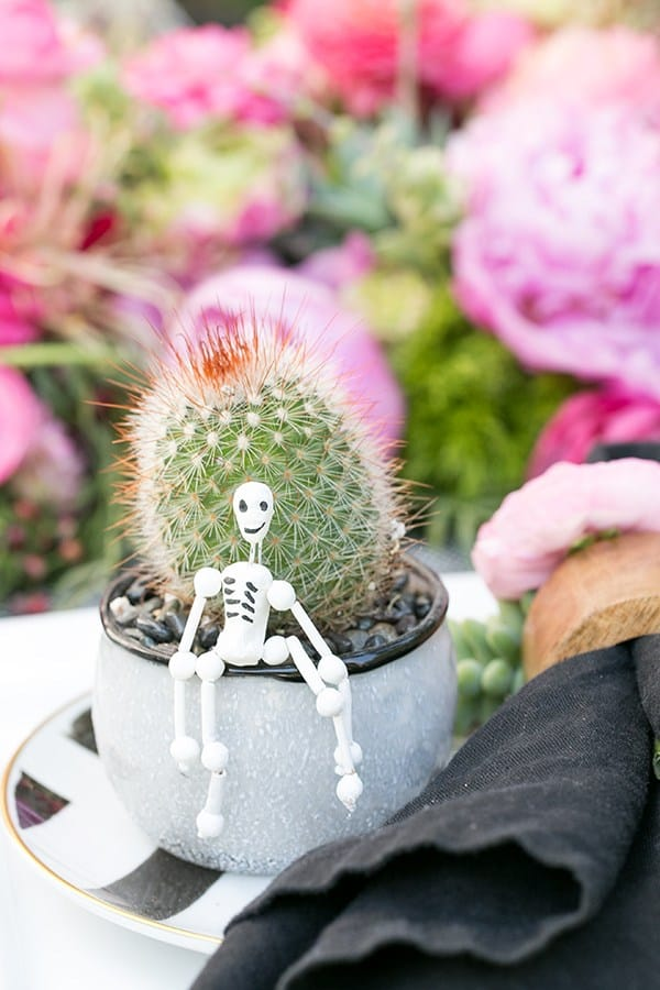 Succulent in a vase with a tiny skeleton sitting on the edge.