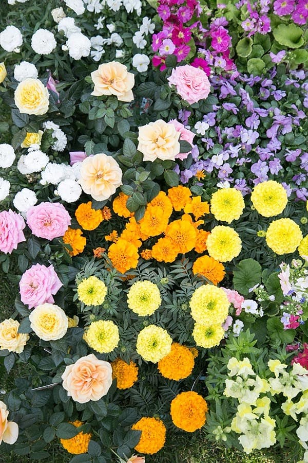 Photo showing an array of colorful edible flowers.