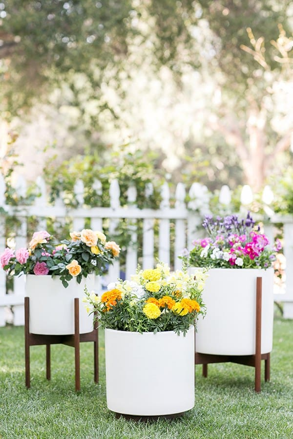 Three large pots filled with edible flowers on a grassy lawn with a white picket fence.