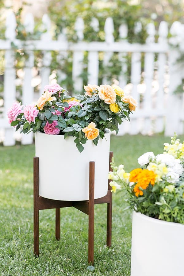 Potted edible flowers in white pot