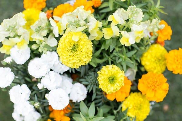 Edible marigold flowers.