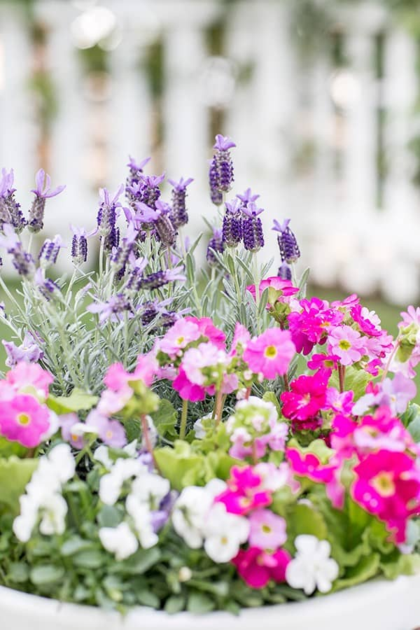 Lavender and other edible flowers in a white pot.