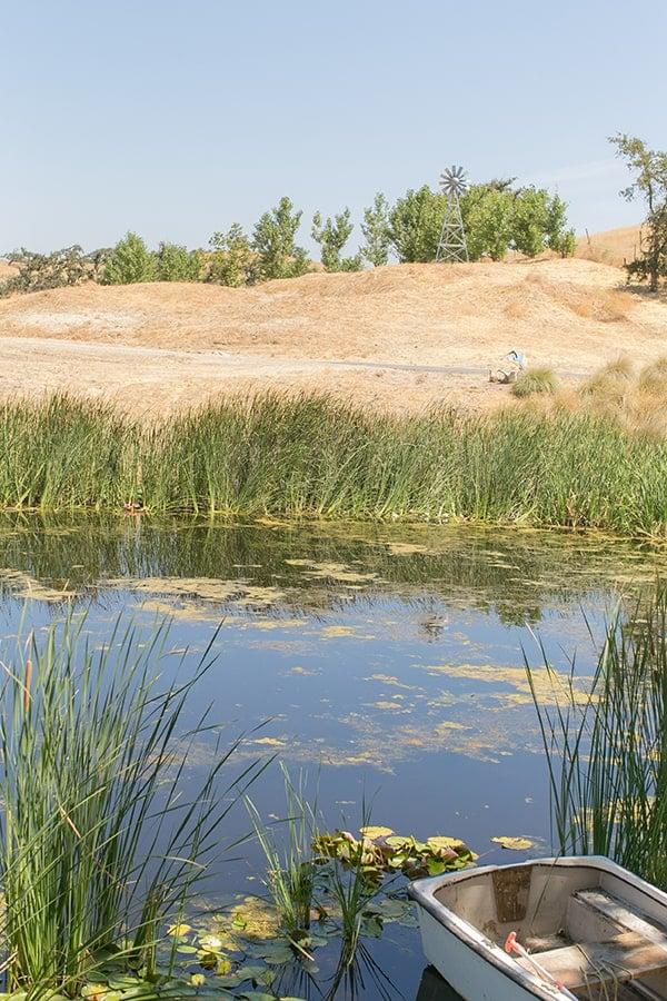 Pond in Los Olivos
