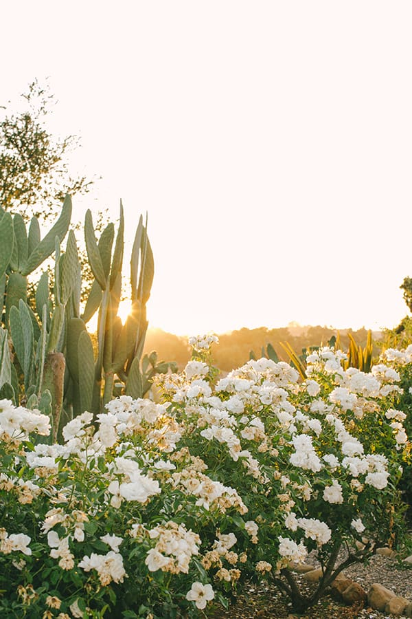 Flowers, cactus and sunset in Los Olivos.