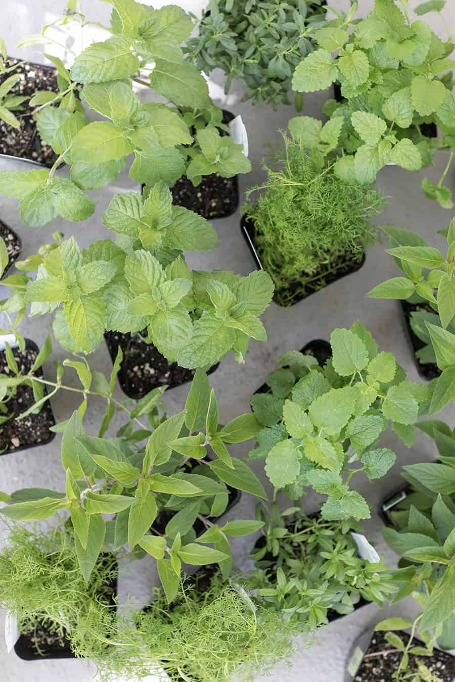 Overhead photo of potted herbs.