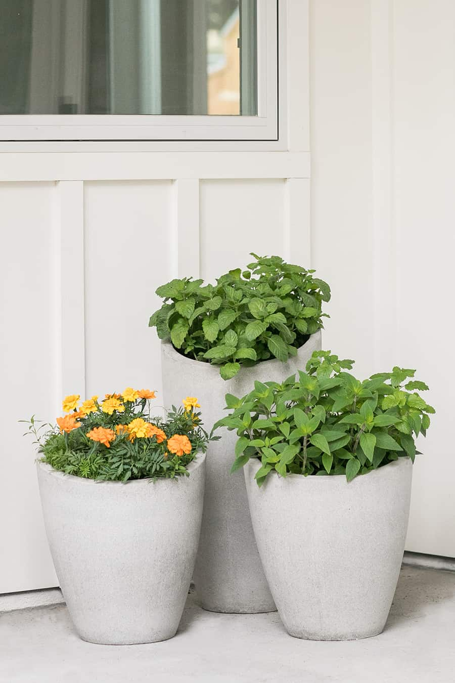 Three concrete pots potted with herbs and flowers.