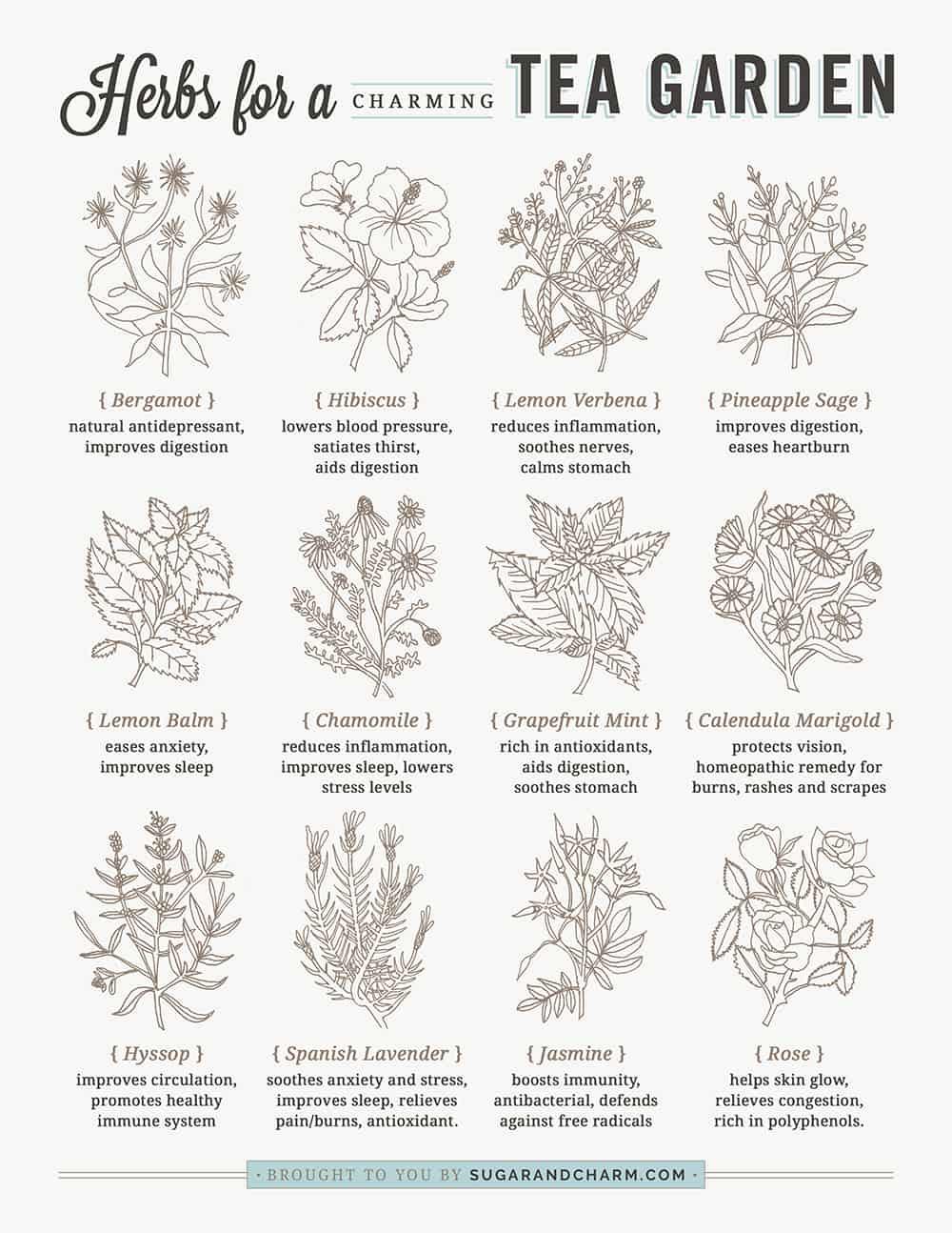Herbs for a Tea Garden