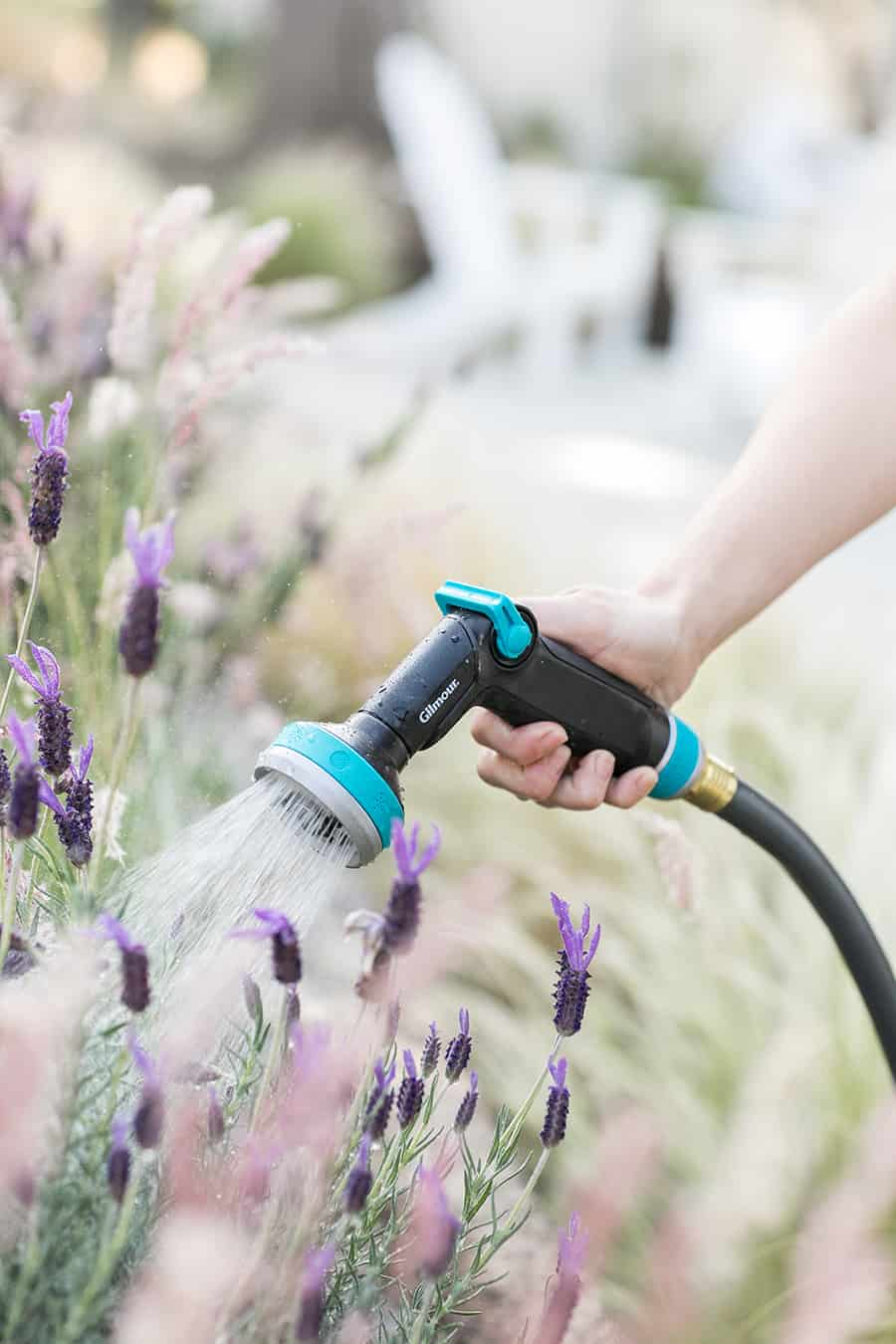 Watering lavender with a Gilmore hose.