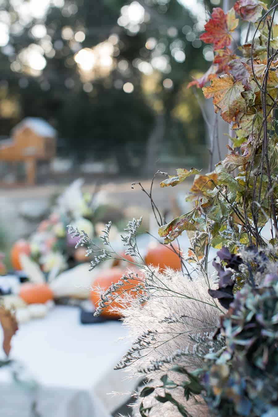 shot of table in garden