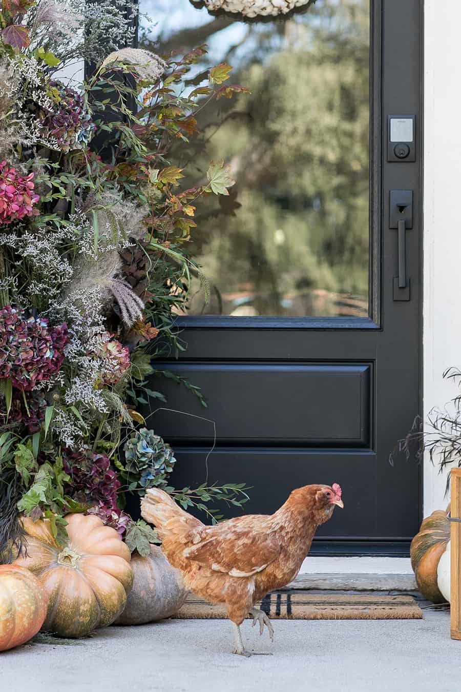 Chicken on front porch for fall