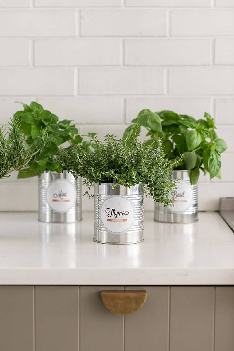 Charming indoor herb garden