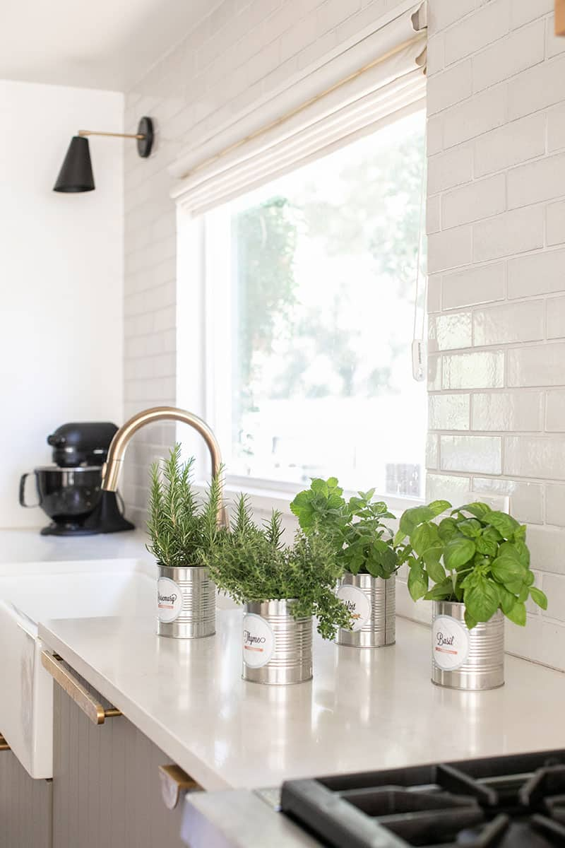 DIY herb gardens in tin cans