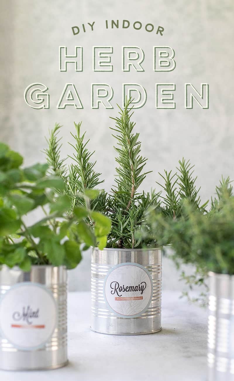 DIY herb garden in tin cans with text overlay.