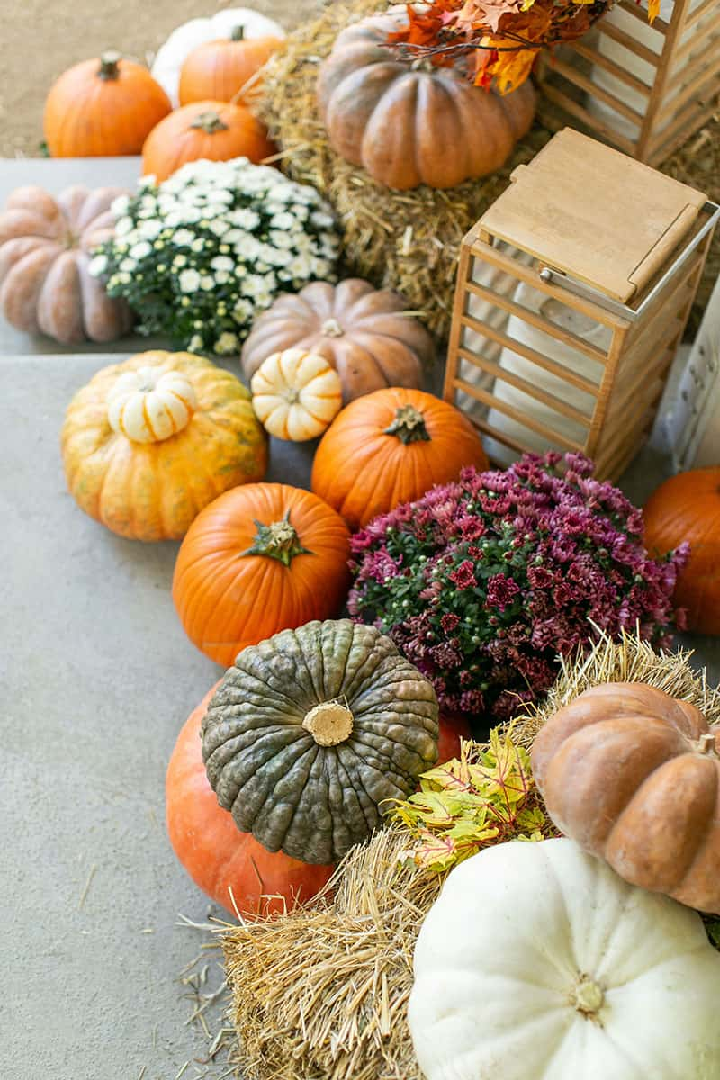 An array of colored pumpkins on a fall porch with hay bales