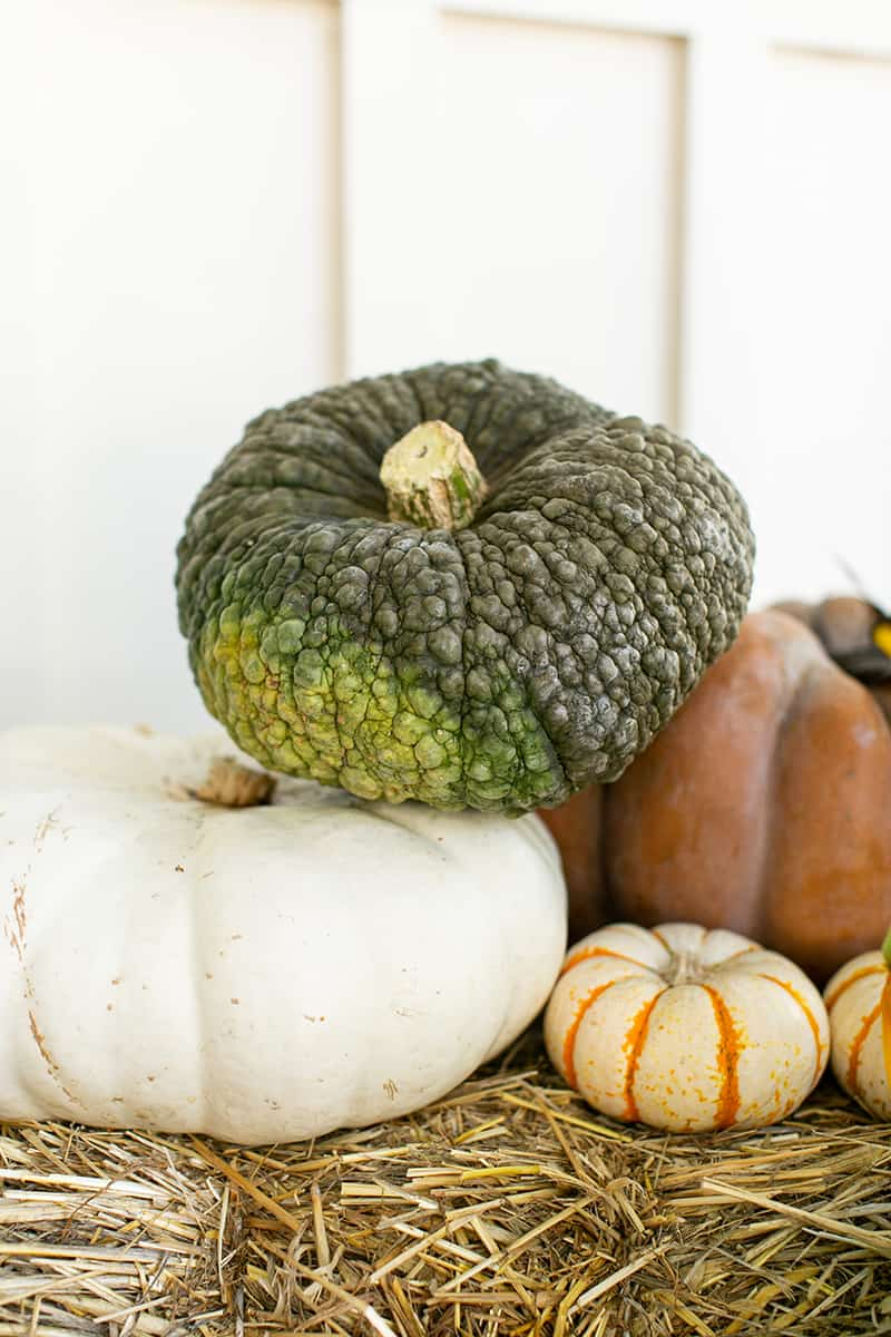 Green and white pumpkins.