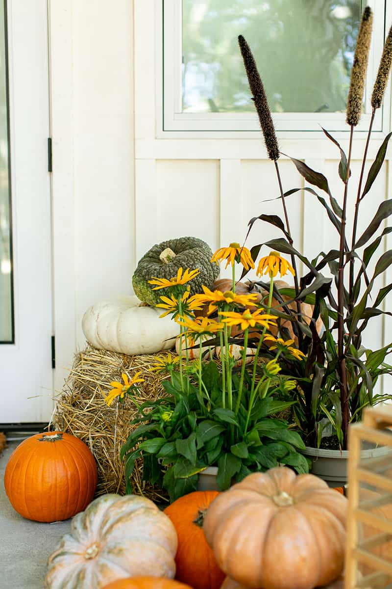 pumpkins and flowers on a fall porch