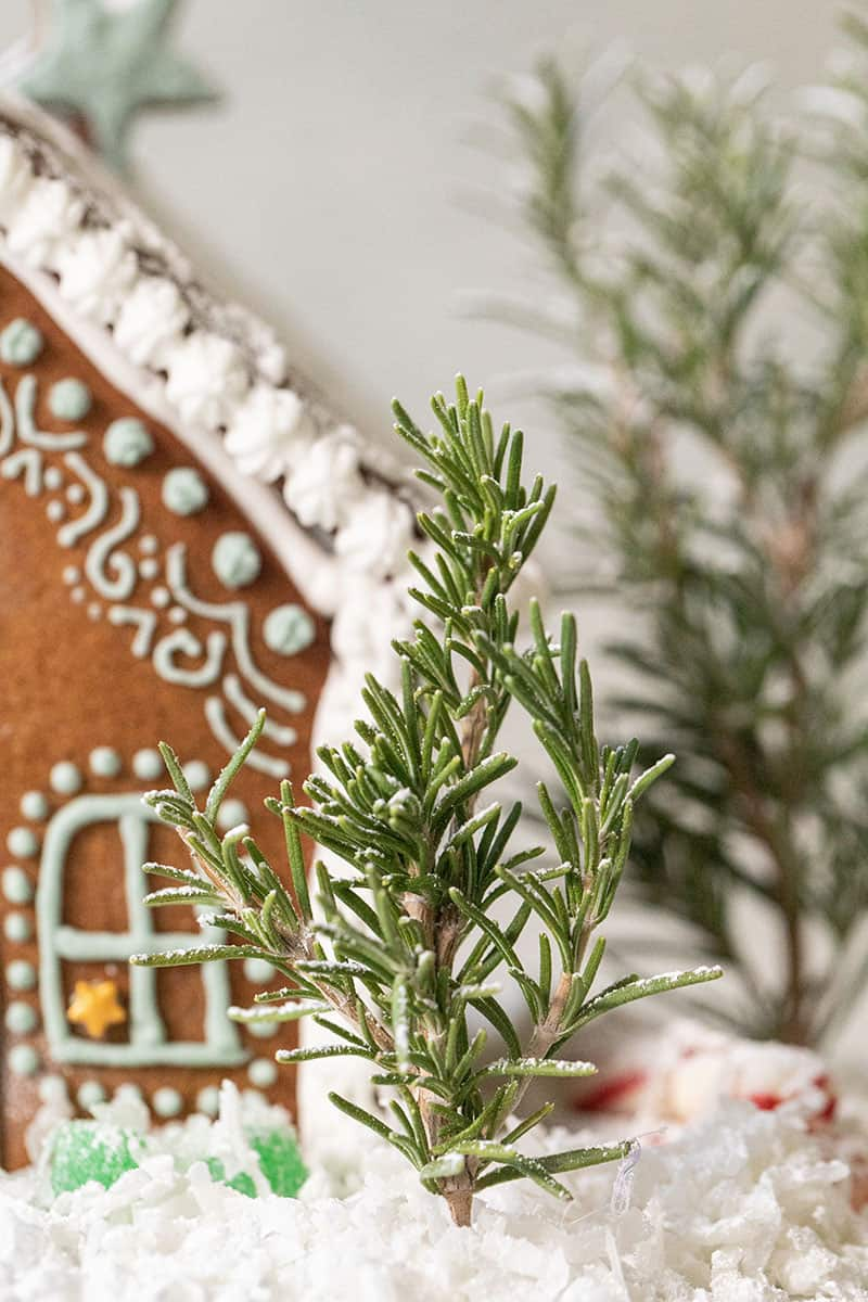 Rosemary tree and a gingerbread house.