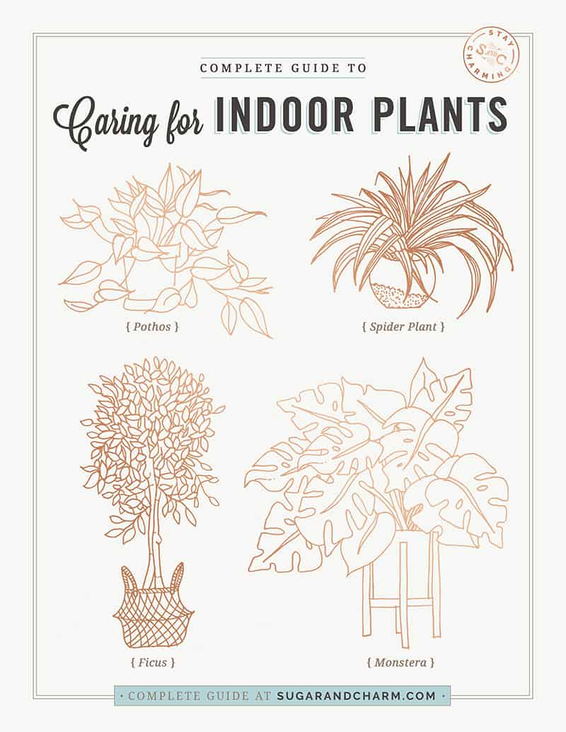 Graphic with drawings of indoor plants