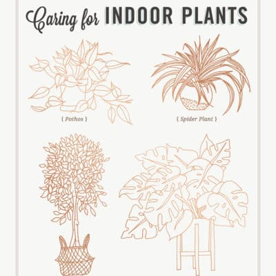 Complete Guide to Caring for 15 Indoor Plants