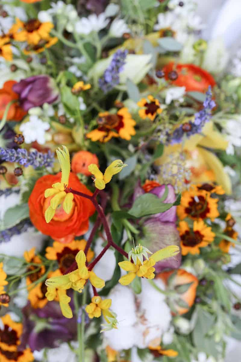 Garden flowers in red, orange and purple.