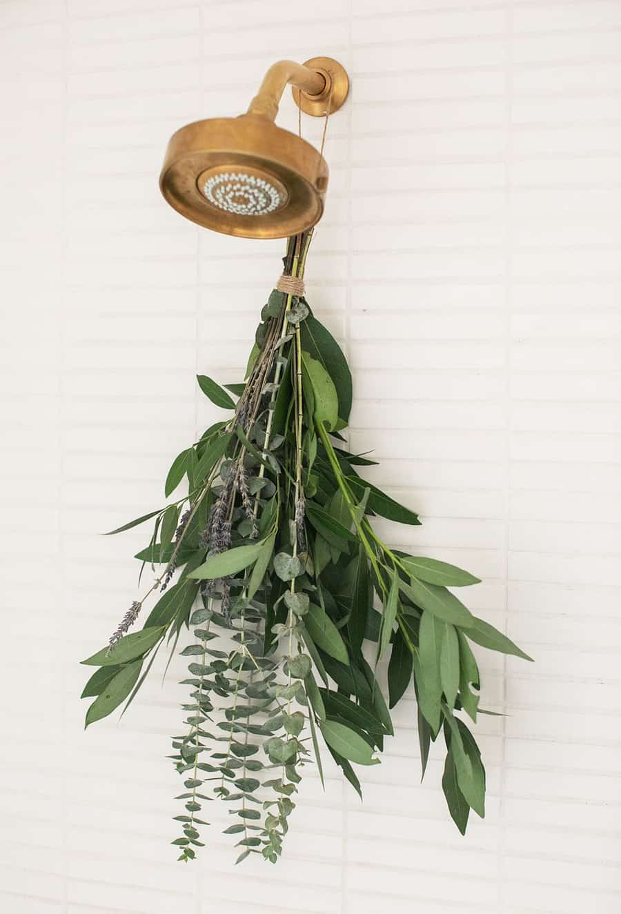 Eucalyptus in shower hanging from shower head