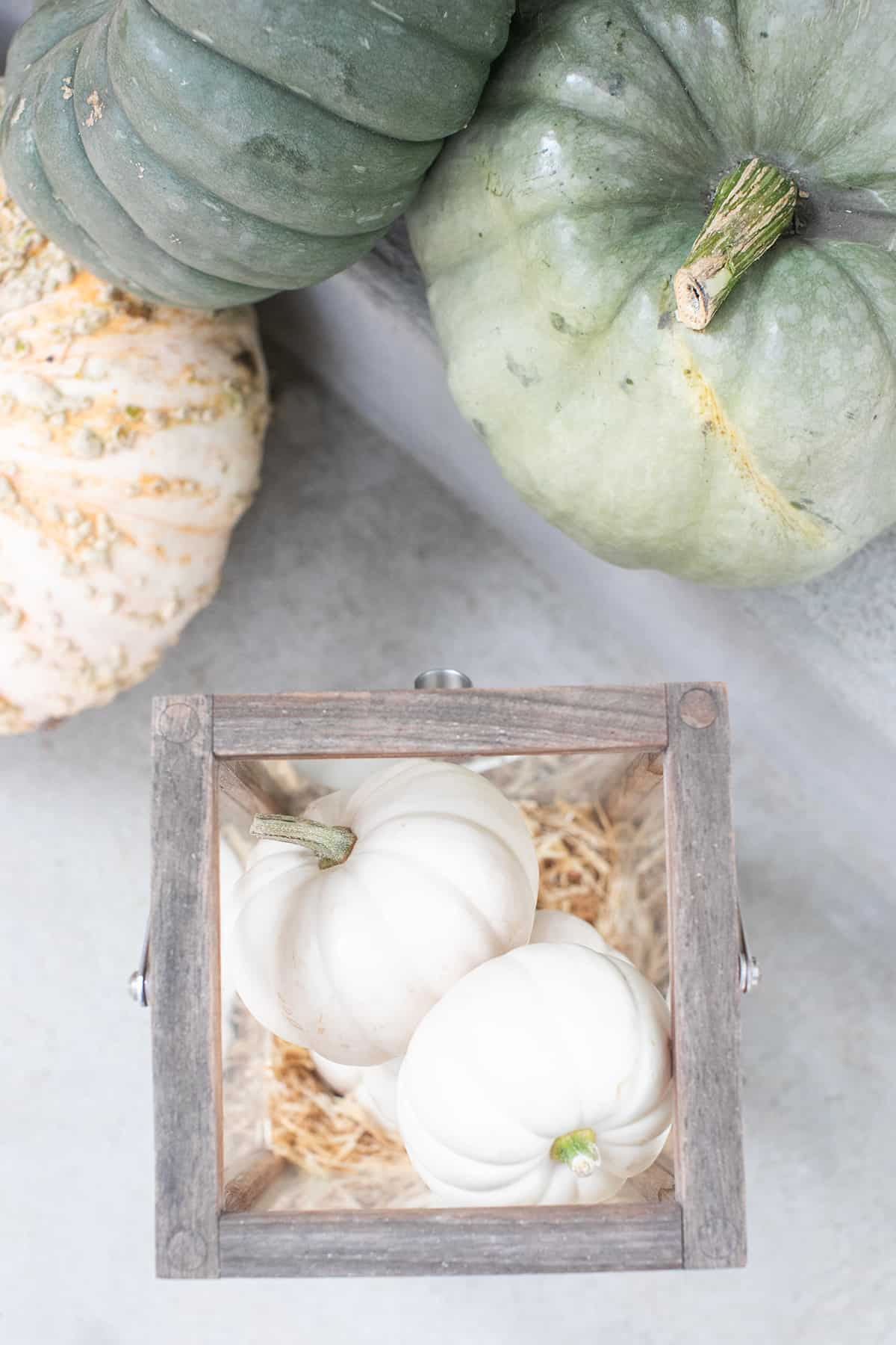 white pumpkins in a lantern